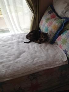 Niya's bed